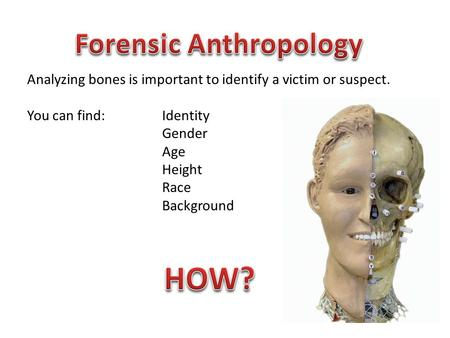 Analyzing bones is important to identify a victim or suspect. You can find: Identity Gender Age Height Race Background.