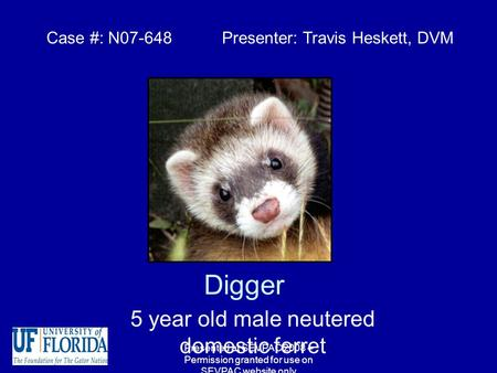 Digger 5 year old male neutered domestic ferret Case #: N07-648 Presenter: Travis Heskett, DVM Presented at SEVPAC 2008 – Permission granted for use on.