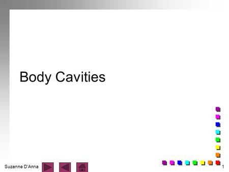 Suzanne D'Anna1 Body Cavities. Suzanne D'Anna2 Body is divided into two portions: n axial - head, neck, and trunk n appendicular - limbs.