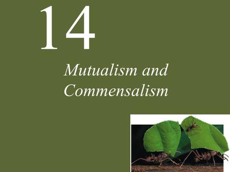 14 Mutualism and Commensalism. 14 Mutualism and Commensalism Case Study: The First Farmers Positive Interactions Characteristics of Mutualism Ecological.