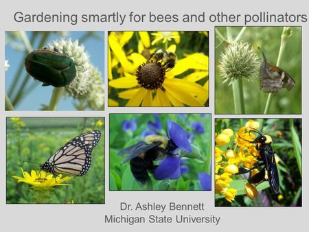 Gardening smartly for bees and other pollinators Dr. Ashley Bennett Michigan State University.