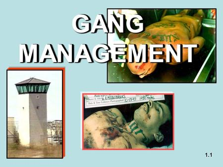 GANG MANAGEMENT 1.1. A Clear and Present Danger  A large amount of prison violence and crime is attributable to gangs although less than ten percent.