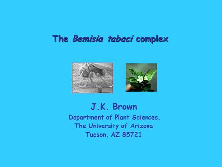 The Bemisia tabaci complex J.K. Brown Department of Plant Sciences, The University of Arizona Tucson, AZ 85721.