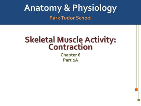 Anatomy & Physiology Park Tudor School Skeletal Muscle Activity: Contraction Chapter 6 Part 2A.
