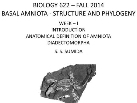 BIOLOGY 622 – FALL 2014 BASAL AMNIOTA - STRUCTURE AND PHYLOGENY WEEK – I INTRODUCTION ANATOMICAL DEFINITION OF AMNIOTA DIADECTOMORPHA S. S. SUMIDA.