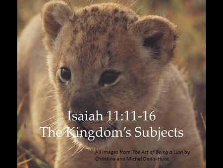 Isaiah 11:11-16 The Kingdom's Subjects All Images from The Art of Being a Lion by Christine and Michel Denis-Huot.