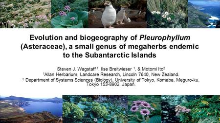 Evolution and biogeography of Pleurophyllum (Asteraceae), a small genus of megaherbs endemic to the Subantarctic Islands Steven J. Wagstaff 1, Ilse Breitwieser.