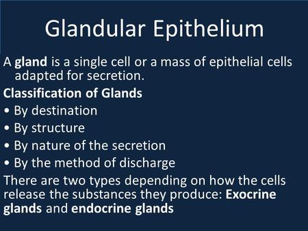 Glandular Epithelium A gland is a single cell or a mass of epithelial cells adapted for secretion. Classification of Glands • By destination • By structure.