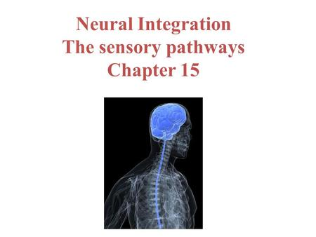 Neural Integration The sensory pathways Chapter 15.
