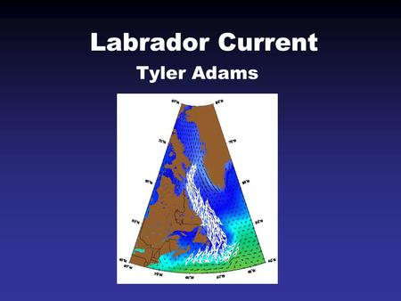 Labrador Current Tyler Adams. Geographically Fed from the north by the Baffin Current Follows the Labrador coast to the Grand Banks Splits at Hamilton.