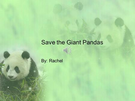 Save the Giant Pandas By: Rachel Welcome readers. Lets learn about giant pandas. Giant pandas generally live in China. The Giant Pandas habitat is in.