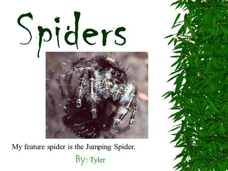 By: Tyler Spiders My feature spider is the Jumping Spider.