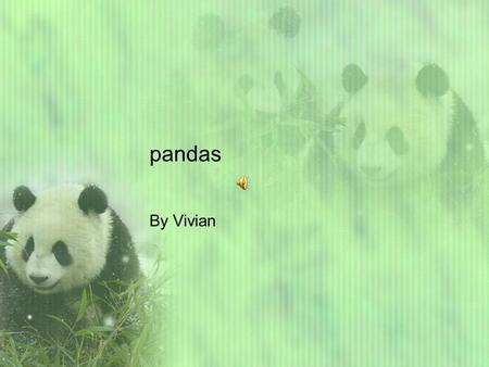 pandas By Vivian Panda facts Pandas are adorable creatures. They live in China and eat bamboo. There habitat has lots of leaves. When a mother panda.