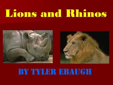 Lions and Rhinos By Tyler Ebaugh In the past, lions could be found in every continent except Antarctica and Australia.