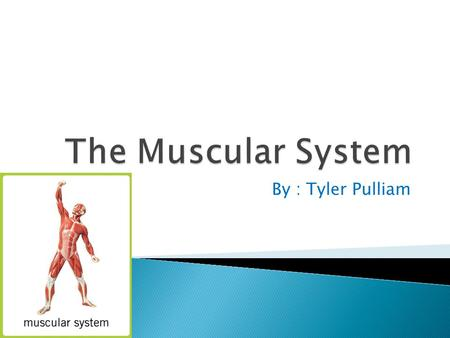 By : Tyler Pulliam. Hello my name is Tyler Pulliam and I will be showing you about my body system which is the muscular system. I will be telling information,