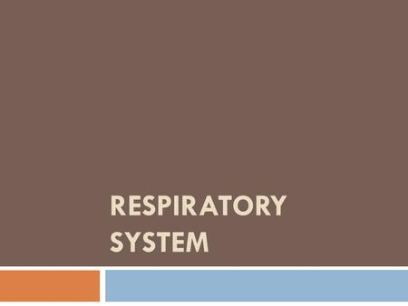 RESPIRATORY SYSTEM. Respiratory System Function  Air distributor – all parts but Alveoli  Gas Exchanger - Alveoli  Air Filter - Nose  Air warmer –