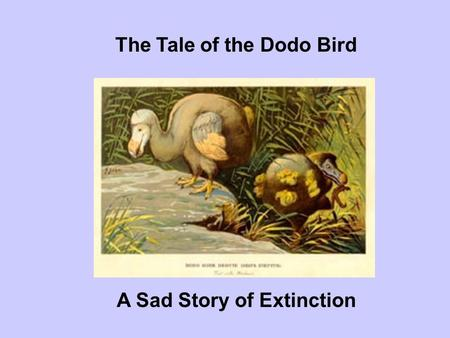 The Tale of the Dodo Bird A Sad Story of Extinction
