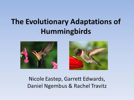 The Evolutionary Adaptations of Hummingbirds Nicole Eastep, Garrett Edwards, Daniel Ngembus & Rachel Travitz.