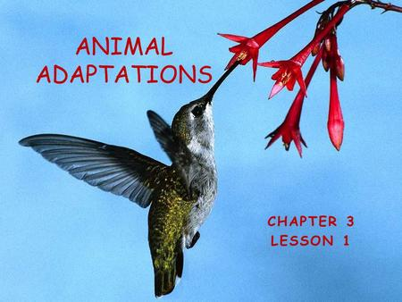 CHAPTER 3 LESSON 1 ANIMAL ADAPTATIONS What Are Adaptations? Adaptations are traits that help an organism survive in its environmenttraits A CAMEL They.