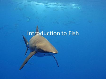 Introduction to Fish.