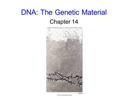 DNA: The Genetic Material Chapter 14. 2 The Genetic Material Frederick Griffith, 1928 studied Streptococcus pneumoniae, a pathogenic bacterium causing.