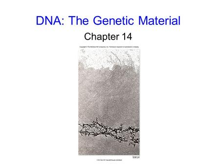 DNA: The Genetic Material Chapter 14. 2 3 The Genetic Material Griffith's conclusion: - information specifying virulence passed from the dead S strain.
