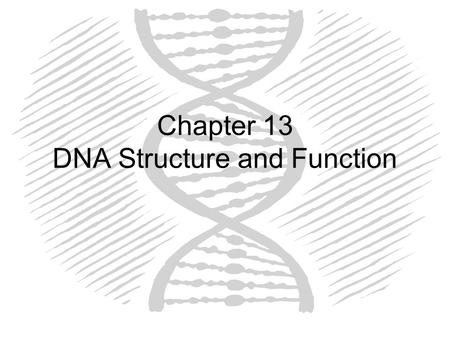 Chapter 13 DNA Structure and Function
