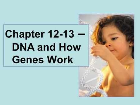 Chapter 12-13 – DNA and How Genes Work. 1920's – Griffith's experiments on transformation 1940's - Avery, MacLeod and McCarty demonstrated that transforming.