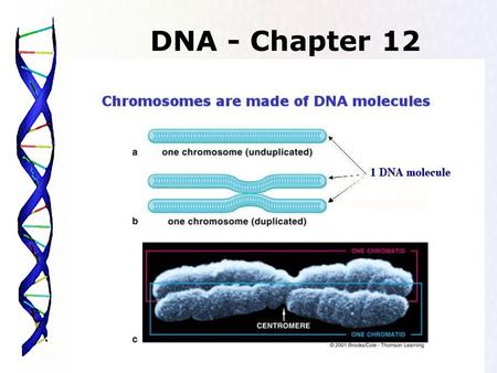 DNA - Chapter 12.
