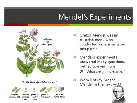 Mendel's Experiments Gregor Mendel was an Austrian monk who conducted experiments on pea plants Mendel's experiments answered many questions, but.