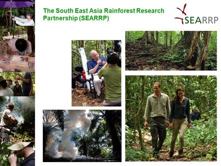 The South East Asia Rainforest Research Partnership (SEARRP)