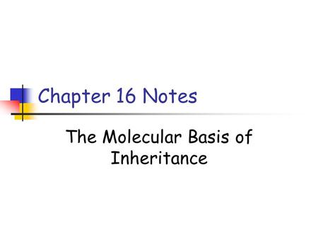 Chapter 16 Notes The Molecular Basis of Inheritance.