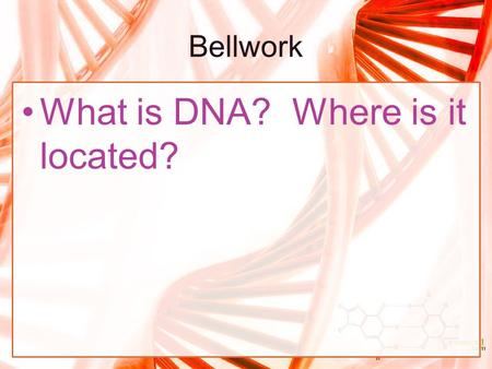 What is DNA? Where is it located?