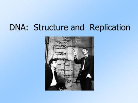 DNA: Structure and Replication. Two Types of Nucleic Acids Nucleic Acids: carry the genetic instructions for all life Nucleic Acid Stands forType of Sugar.