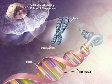 NUCLEIC ACIDS (DNA and RNA) They are large, complex molecules of high molecular weight. They contain C, H, O, N and P. Their monomers are nucleotides.