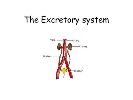 The Excretory system. Functions of the Excretory System Removal of waste products from the body.
