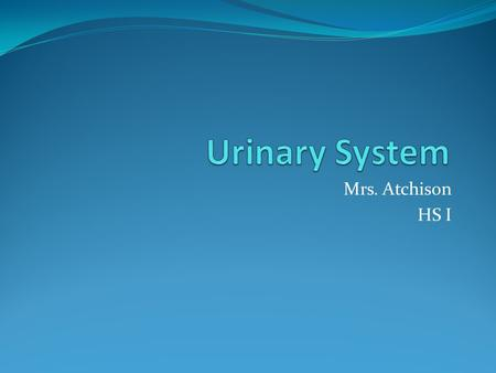 Urinary System Mrs. Atchison HS I.