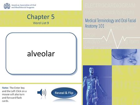 Chapter 5 Word List 9 (Pertaining to) A hollow cavity or pit (tooth socket) alveolar Note: The Enter key and the Left Click on a mouse will also turn.