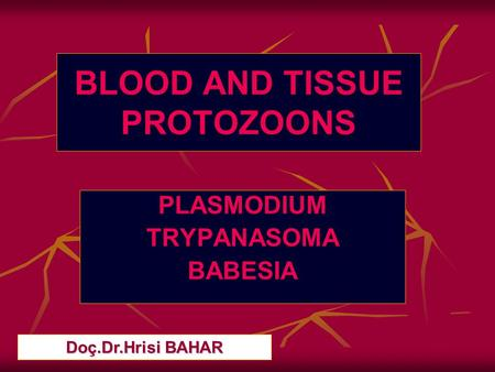 BLOOD AND TISSUE PROTOZOONS
