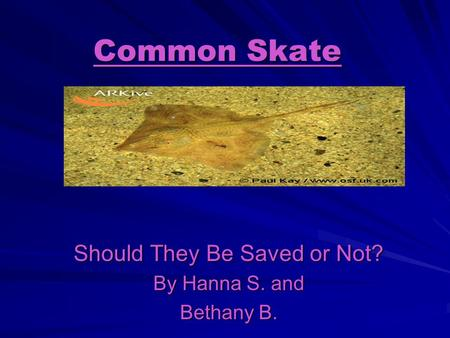 Common Skate Should They Be Saved or Not? By Hanna S. and Bethany B.