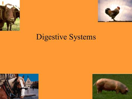 Digestive Systems.