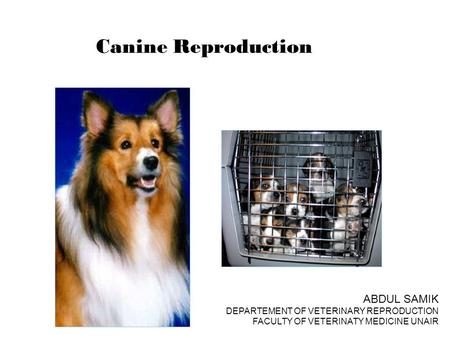Canine Reproduction ABDUL SAMIK DEPARTEMENT OF VETERINARY REPRODUCTION