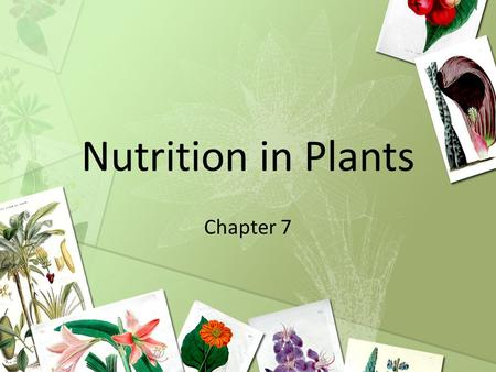 Nutrition in Plants Chapter 7. Learning Objectives State the equation, in words and symbols, for photosynthesis. State the essential conditions of photosynthesis.