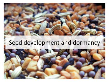 Seed development and dormancy. Seed A fertilized ovule Protective outer covering (seed coat) Storage tissue (cotyledons, endosperm) Embryo (radicle and.