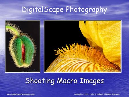 DigitalScape Photography Shooting Macro Images www.DigitalScapePhotography.comCopyright © 2012 – John J. Holland, All Rights Reserved.