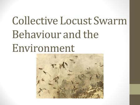 Collective Locust Swarm Behaviour and the Environment.