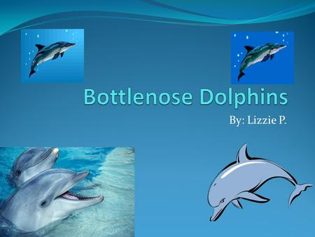 By: Lizzie P.. Table of contents Introduction Slide 1 What is a bottlenose dolphin?Slide 2 Where does a bottlenose dolphin live? Slide 3 and 4 Where is.