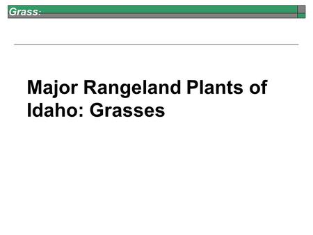 Grass : Major Rangeland Plants of Idaho:Grasses. Grass : Bluebunch Wheatgrass Perennial Native Good for Grazers Good for Browsers Jennifer Peterson Seeds.