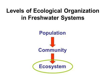 stream ecology intro essay