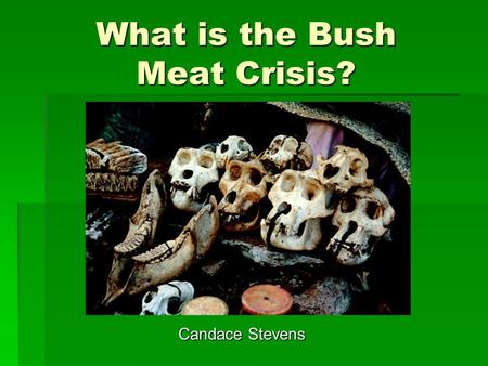 What is the Bush Meat Crisis? Candace Stevens. Definition of Bush Meat  Wild animals that are slaughtered for sale and production of meat.  Monkeys,